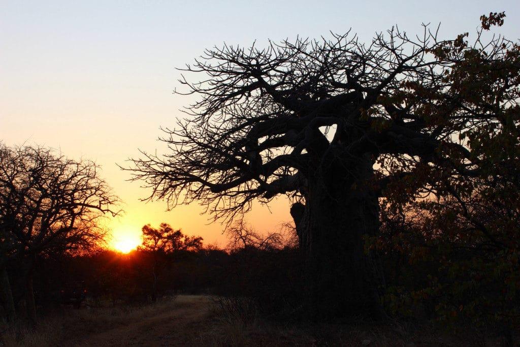 South Africa Hunt Sunset