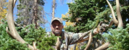 My Utah LE muzzleloader bull taken in 2011 with  Knight 50 cal Disc Extreme