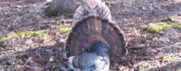 My son jordan killed this gobbler at 57 yards. 12 inch beard 1 1/2 spurs. This is his fourth bird with the tk 2000.