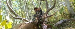 Utah limited entry muzzle loader elk hunt. 45 cal 275gr power belts 150gr 777. Practiced all summer out to 200 yards ended up sealing the deal at 30 yards.