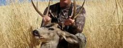 Day 2 of Washington public hunt mule deer from 10 yards.