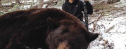 We chased this bear in some really rugged country for a few hours getting in close a couple of times, finally our hounds held him just long enough to make a good 70 yard shot on this record book Utah bear. Not bad for a 13 year old and my first bear.