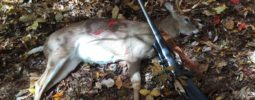 Opening day of muzzleloader ! I shot him about 80 yards through a small opening in the woods ! I found him laying 20 yards from where he was shot !